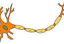 La Polynévrite - Neuropathie.org